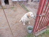 Poszukujemy właściciela psa
